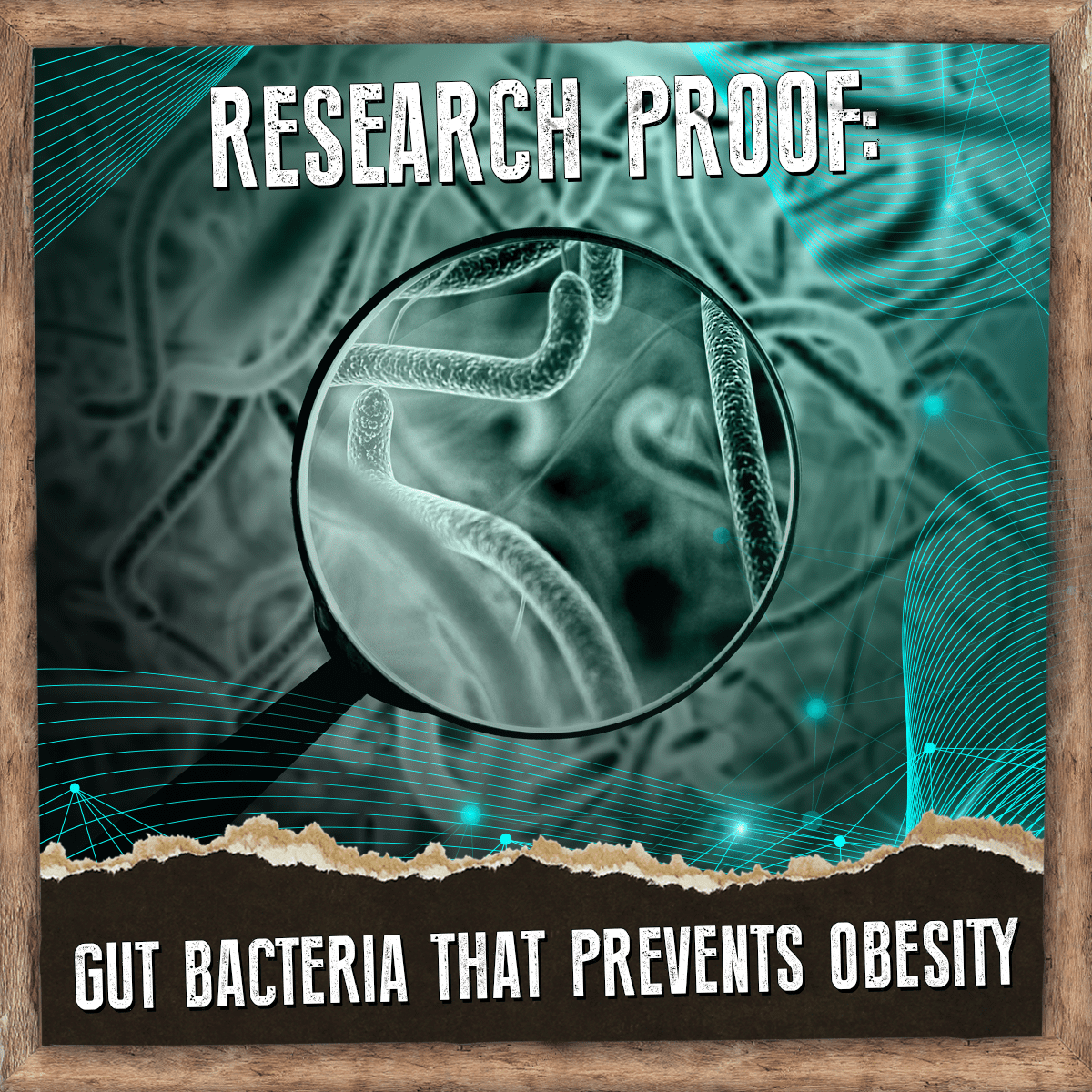 Research Proof - Gut Bacteria Prevents Obesity