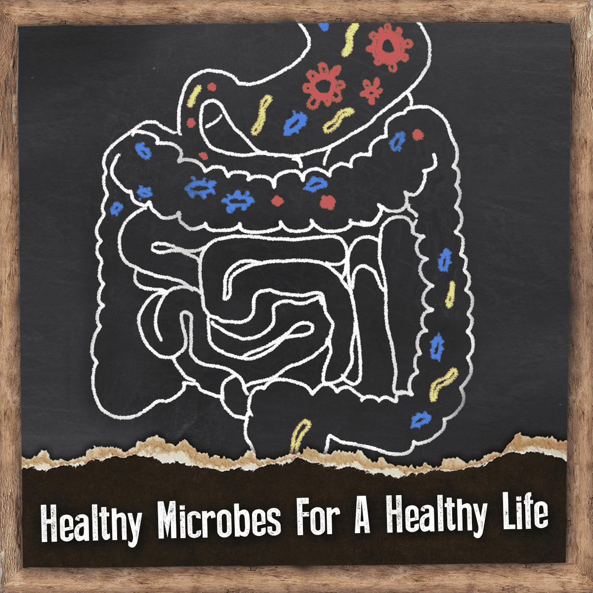 alcohol microbiota and your gut health