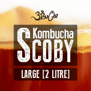 Kombucha Starter Kit - Large Scoby For Home Brewing